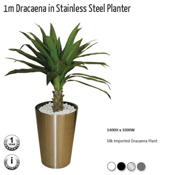 1m  Dracaena  in  Stainless  Steel  Planter